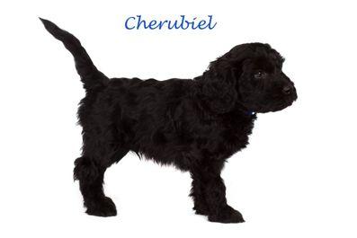 Cherubiel