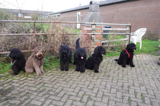 A lot of l'Esprit de bonté! From left: Yeye, Moët, Yatzie, Frits, Luna and Teddie!
