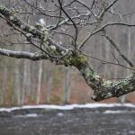 Ett stilla vårregn