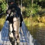 Knagglarre med bro