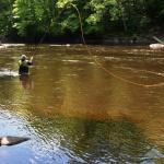 Fiske på Rosendala