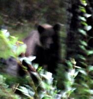 Björn i min trädgård