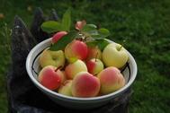 Årets äppelskörd 2014