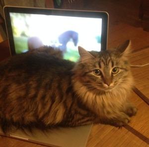 Freja jobbar på datorn.