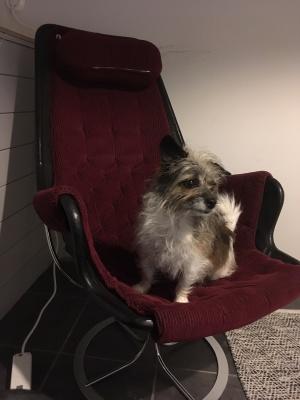 På vårt kontor på Entreprenörsgatan är hundar tillåtna. Det tycker vi på Yoma är underbart!