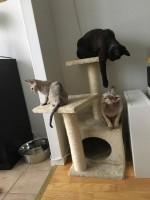 Kattunge, mamma och moster