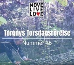 Torgny Steens Torsdagsrörelse 16