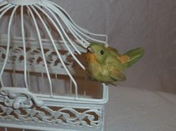 Pippi på fåglar