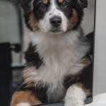 Lasse Lohman_Hund