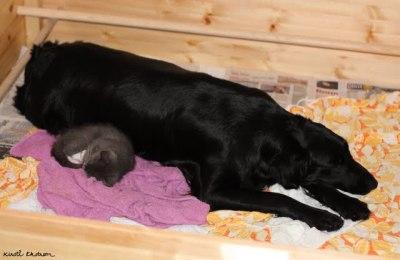 Lotta og Anne Cath hviler rett før fødselen starter.