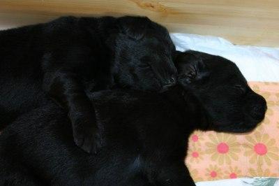 Søster og bror <3