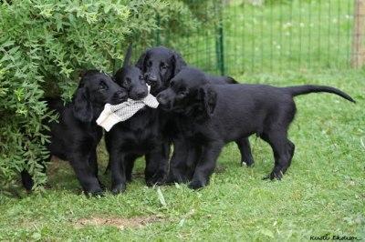 De fire apportører. :-)