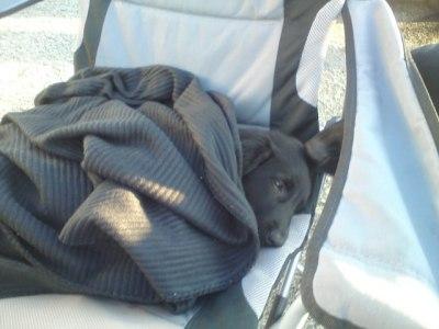 Lily syns det var litt kaldt på bakken og klatret opp på stolen for å sove. :-)