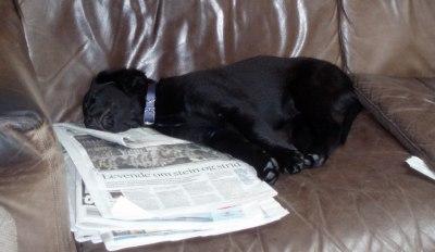 Solan har fått egen sofa ... ;-)