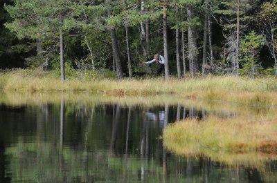 Jaktprøve i Østfold Foto: Ann-Kristin Olsen