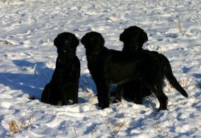 Lotta, Ace og Nemi :-)