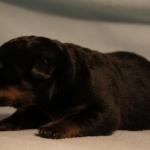 Merlin 1 week old