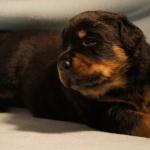 Merlin (2) 3 weeks old