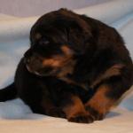 Merlin (3) 3 weeks old