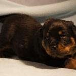Merlin (4) 3 weeks old