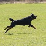 Merlin-träning-rondering-mars 2012-6