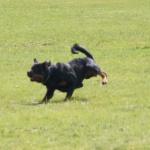 Merlin-träning-rondering-mars 2012-7