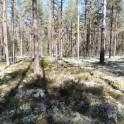 spårmarker
