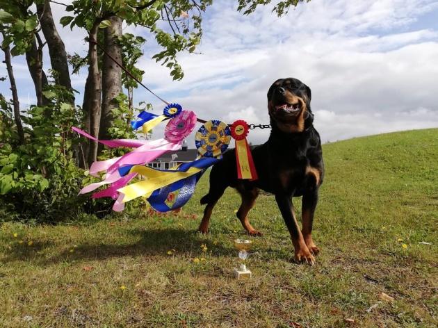 LD START SPHI Nordkalottens Gaston- Artic circle dogshow, Överkalix 20190817 Excellent, CK, Bästa hane, BIR och CERT