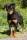 Kiwi fram stå 1