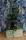 William Morris 15