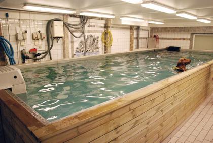 Vår stora pool är 7 ½ x 2 ½ meter. Den har ett djup på 1,40 meter och är gjord i rostfritt stål. I denna pool har vi en jet-stream, som ger ett motstånd i form av strömt vatten. Detta motstånd går att variera steglöst beroende på vilken kondition hunden är i.