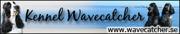 Kennel Wavecatcher