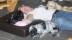 Grant, Brolle, Milla och Sanne vilar