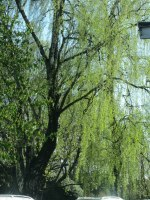 bildretreat ditt inre träd