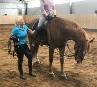 Även hästens ryttare får utbildning