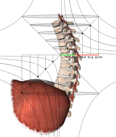 SEGMENTATION OF THE THORACIC SPINE AND CAVITY BY USING THE RECTANGULAR HYPERBOLA. THE T6-10 REGION IS A MIRROR IMAGE OF THE C7-T5 REGION.