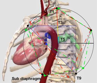 THE POINT OF PURE ROTATION LOCATED IN LEFT ATRIUM OF THE HEART.