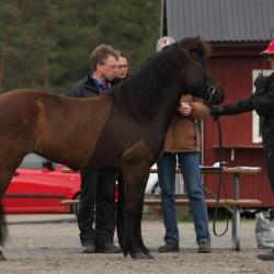 Támyrja på bedömning i Vaggeryd 2009