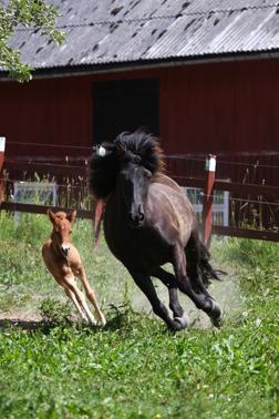 Full fart på Támyrja och hennes son Arinn, foto Emma Jansson.