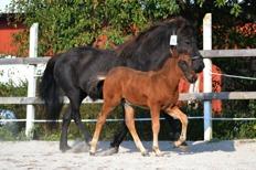 Arnor tillsammans med mamma Mynta, foto Matilda Gunnar.