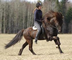 Vackra Alfari en häst med finfina gångarter!