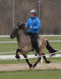 Ísak från Ammor avelsbedömd med 8,0 i ridegenskaper redan som 4-åring och 8,31 som 5-åring, foto Stine Balchen.