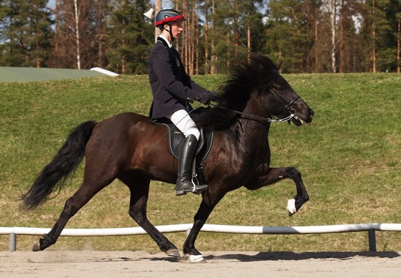 Milla med sin nya ryttare. Denna bild är inte från SM. Foto Ulrika Forsstedt.