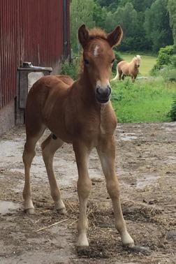 Heiðir från Ammor 12 dagar gammal.