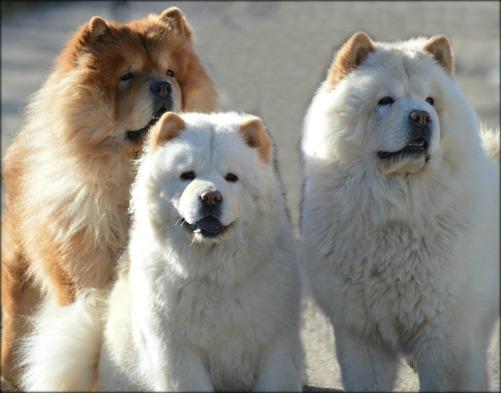 Leo'n, Nellie och Ben - 3 generationer hos Nellwood's