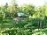 Trädgård .
