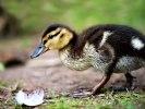DSC_3079visst en fjäder av en höna men..