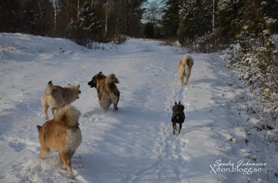 Loke, Aurora, Leah, Faith & Rocky
