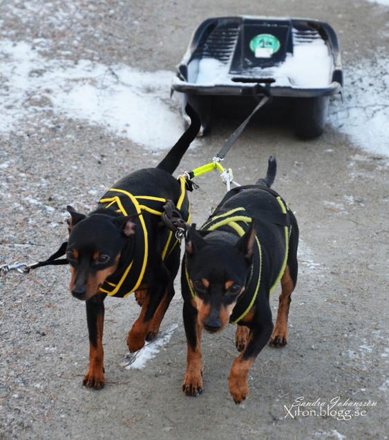 Zorro & Rocky