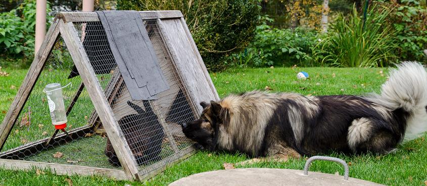 """Här är Elvis sjuk väger ca 25 kg, men man ser hans glädje i att få titta på kaninen Stitch. Var sista gången han var """"hemma""""."""